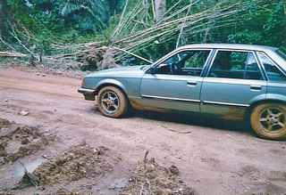 Guinea rain forest