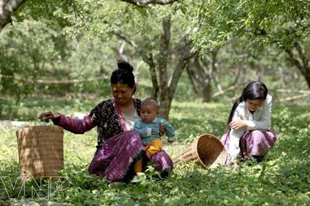 Mong family Vietnam